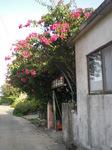 096津嘉山荘.JPG